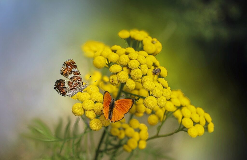 butterflies, flowers, insects